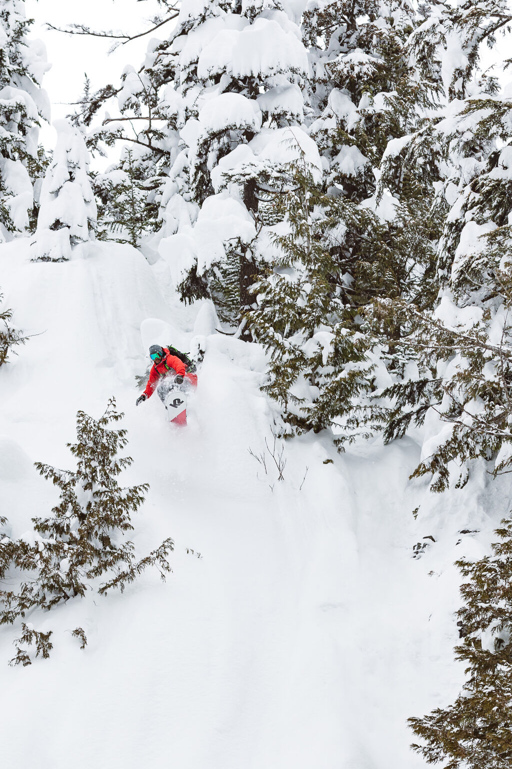 coming through the trees in the pow
